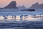 Seagulls & Sea Stacks